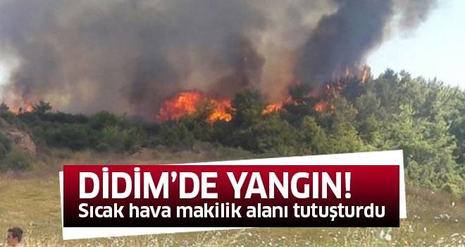 Didim'de yangın