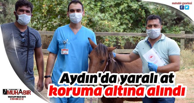 Aydın'da yaralı at koruma altına alındı