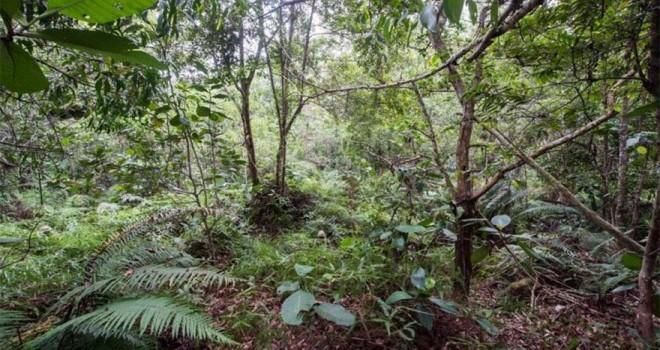 Ormanda kamufle olan 12 askeri görebiliyor musunuz?