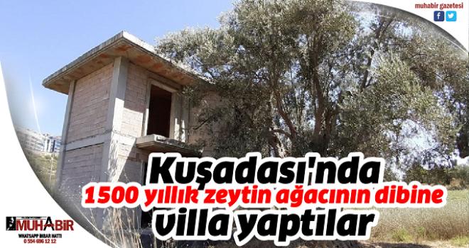 Kuşadası'nda 1500 yıllık zeytin ağacının dibine villa yaptılar