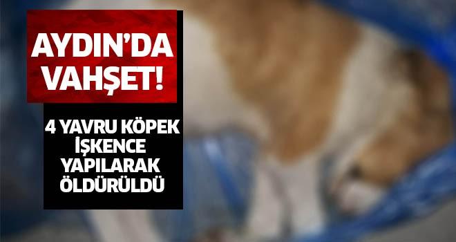 Aydın'da vahşet!