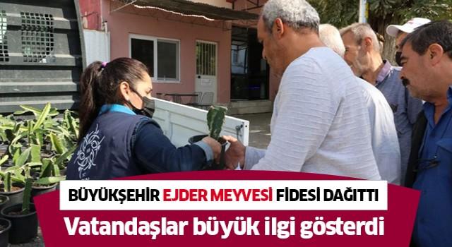Büyükşehir vatandaşlara 'ejder meyvesi' fidesi dağıttı