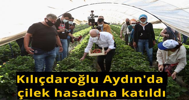 CHP Genel Başkanı Kılıçdaroğlu Aydın'da çilek hasadına katıldı