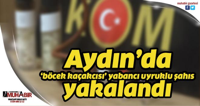 Aydın'da 'böcek kaçakcısı' yabancı uyruklu şahıs yakalandı
