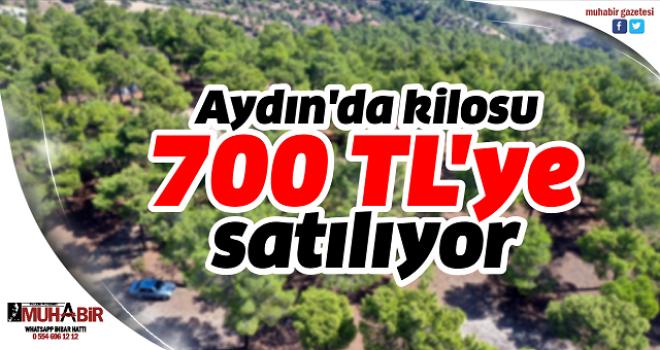 Aydın'da kilosu 700 TL'ye satılıyor