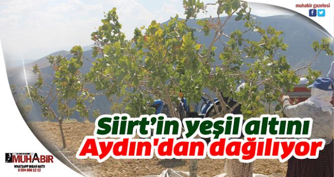 Siirt'in yeşil altını Aydın'dan dağılıyor