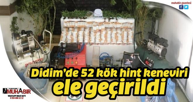 Didim'de 52 kök hint keneviri ele geçirildi