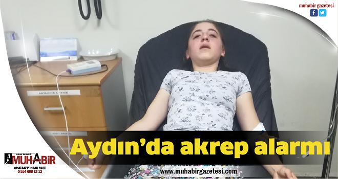 Aydın'da akrep alarmı