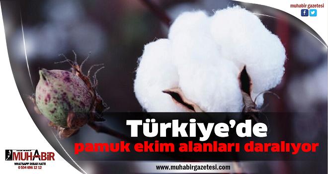 Türkiye'de pamuk ekim alanları daralıyor