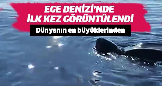 Ege Denizi'nde ilk kez görüntülendi