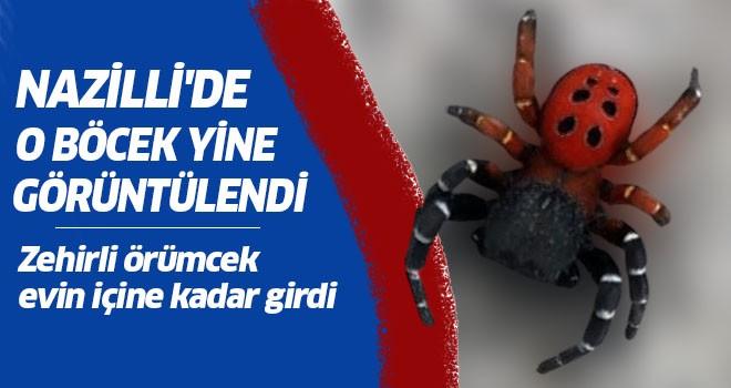 Nazilli'de o zehirli böcek yine görüntülendi