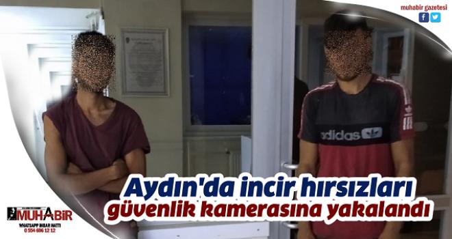 Aydın'da incir hırsızları güvenlik kamerasına yakalandı