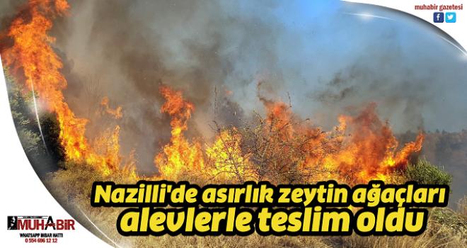 Nazilli'de asırlık zeytin ağaçları alevlerle teslim oldu