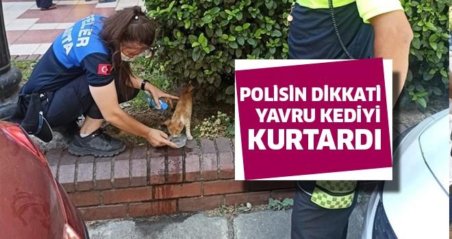 Polisin dikkati yavru kediyi kurtardı
