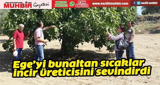 Ege'yi bunaltan sıcaklar incir üreticisini sevindirdi