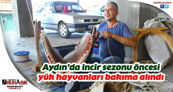 Aydın'da incir sezonu öncesi yük hayvanları bakıma alındı