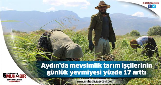 Aydın'da mevsimlik tarım işçilerinin günlük yevmiyesi yüzde 17 arttı