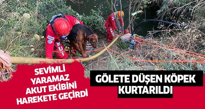 Aydın'da gölete düşen köpek kurtarıldı
