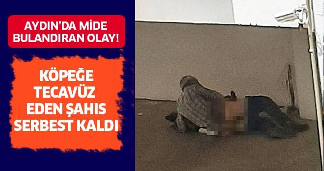 Aydın'da mide bulandıran olay!