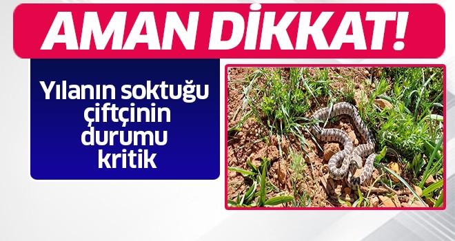 Aydın'da zehirli yılan saldırısı