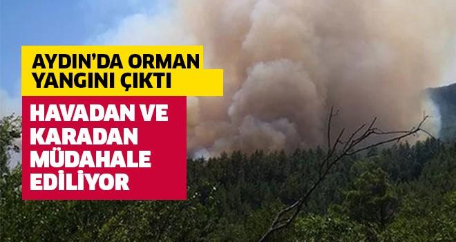 Aydın'da orman yangını!