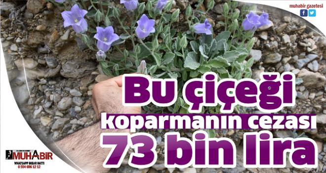 Bu çiçeği koparmanın cezası 73 bin lira