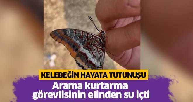 Yangından kaçan kelebeğin hayata tutunuşu