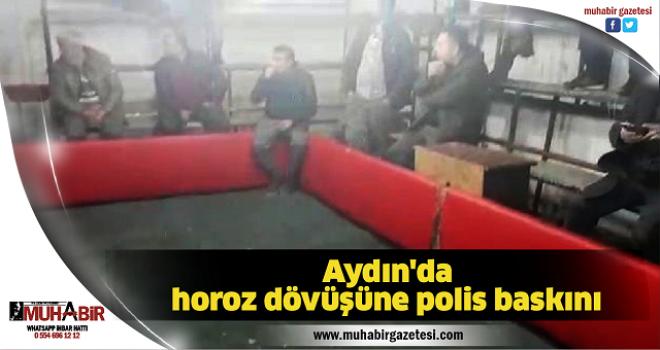 Aydın'da horoz dövüşüne polis baskını