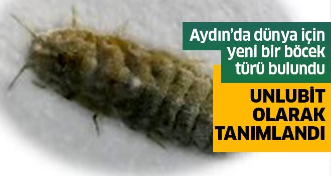 Aydın'da yeni bir böcek türü bulundu
