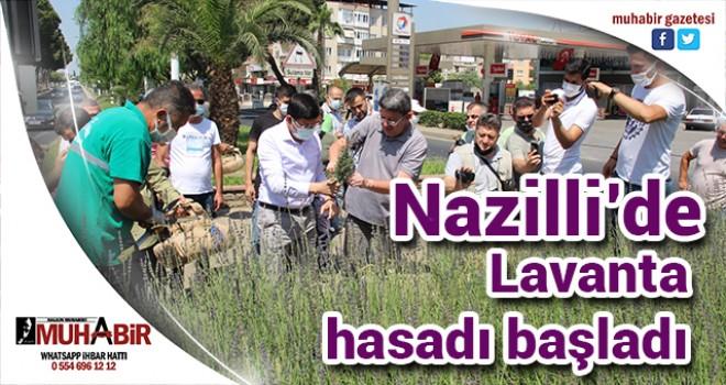 Nazilli'de Lavanta hasadı başladı
