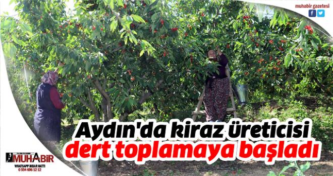 Aydın'da kiraz üreticisi dert toplamaya başladı