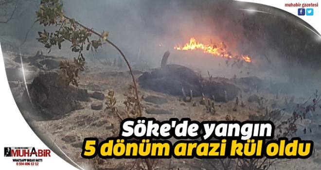 Söke'de yangın; 5 dönüm arazi kül oldu
