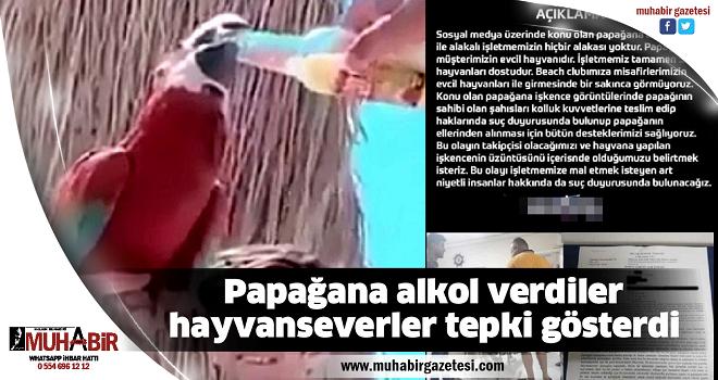 Papağana alkol verdiler, hayvanseverler tepki gösterdi