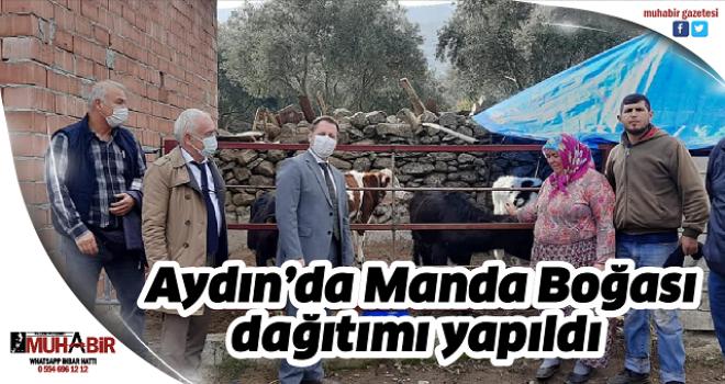 Aydın'da Manda Boğası dağıtımı yapıldı