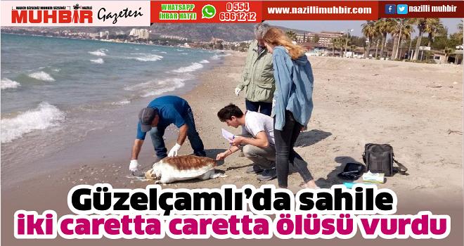 Güzelçamlı'da sahile iki caretta caretta ölüsü vurdu