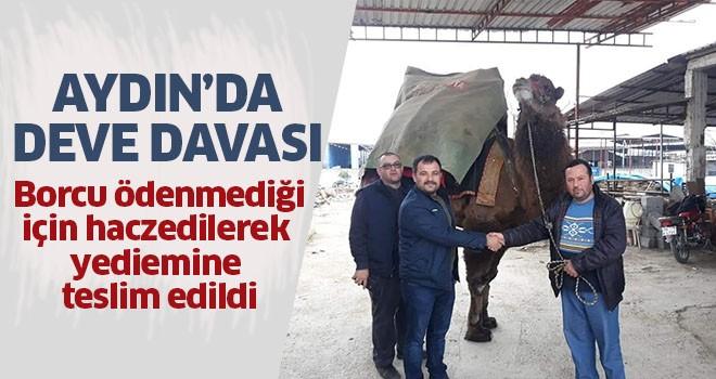 Aydın'da deve davası
