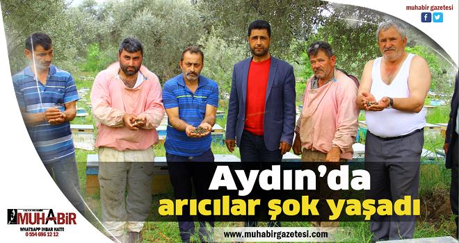Aydın'da arıcılar şok yaşadı