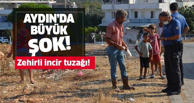 Aydın'da zehirli incir tuzağı