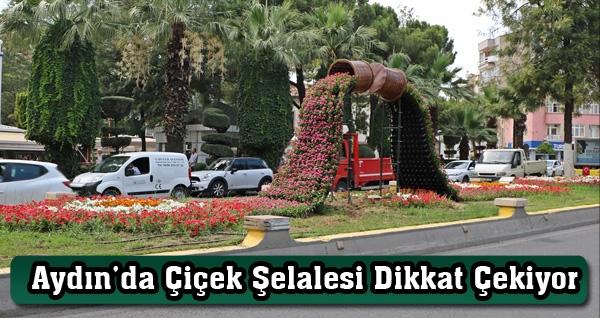 Aydın'da Çiçek Şelalesi Dikkat Çekiyor