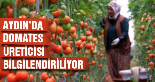 Aydın'da Domates Üreticileri Bilgilendiriliyor