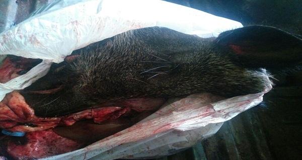 Aydın'da domuz eti skandalı