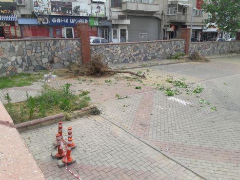 Nazilli'de ağaç katliamı başladı